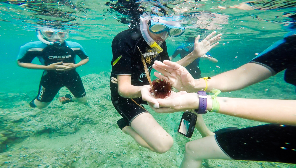 Snorkeling oursin Ametlla del Mar