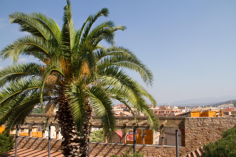 palmier chemin de ronde tortosa