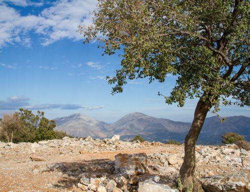 Agrotrip en Crète – Le berger du Mont Psiloritis
