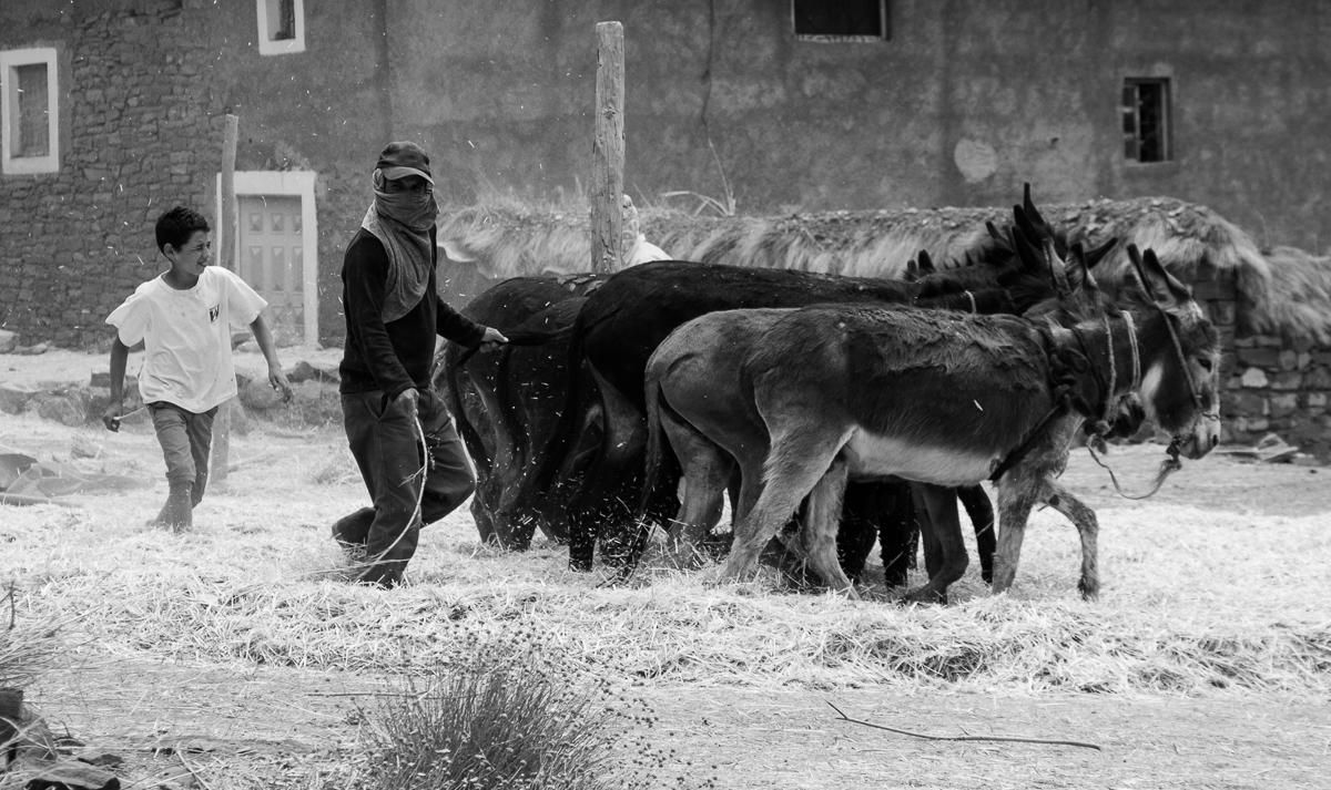 moisson battage Maroc Atlas