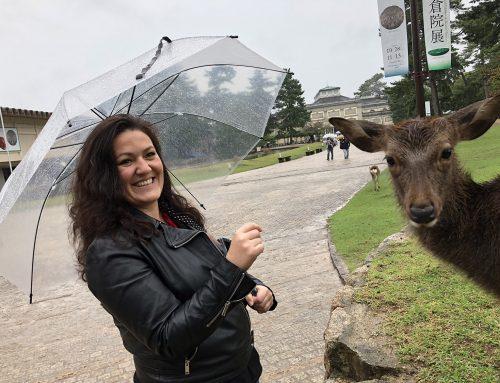 Nara : des daims sous la pluie