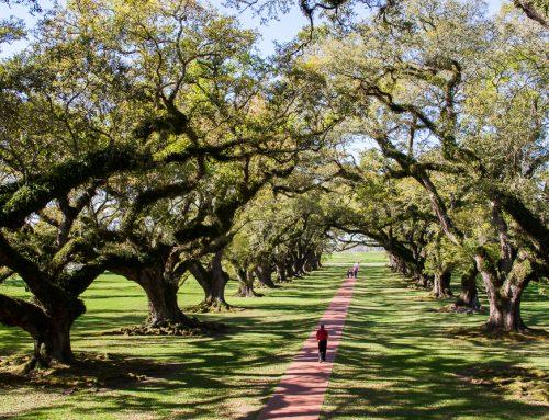 Sur la route des plantations du Vieux Sud